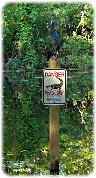 Danger1.jpg