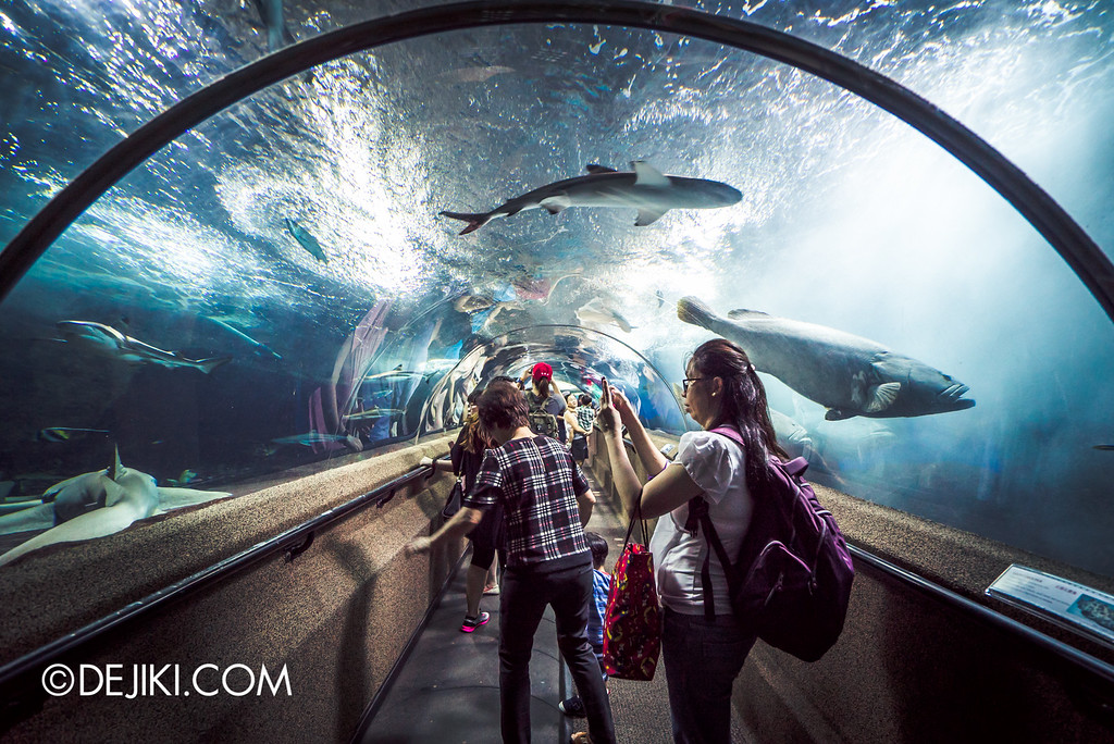 Underwater World Singapore - Tunnel front