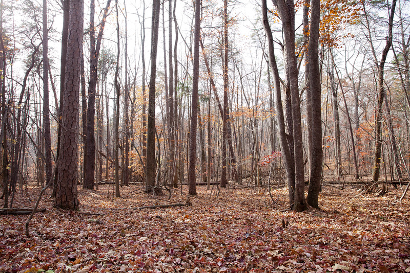 Forest8.jpg