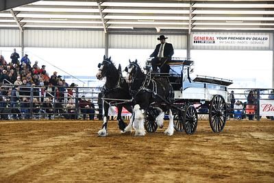 Clydesdale Team