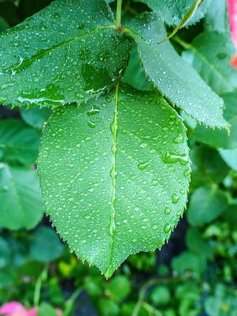 130411 Leaf Study