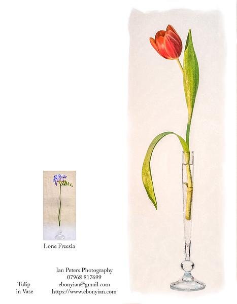 Tulip in Vase 18cm x 7 cm.jpg