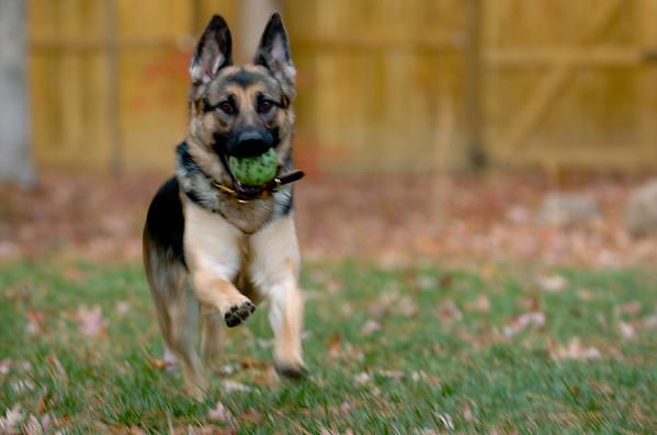 Fritzi playing in backyard