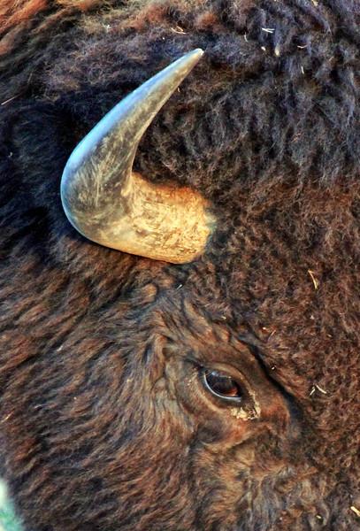 Yellowstone Best of-188 copy.jpg