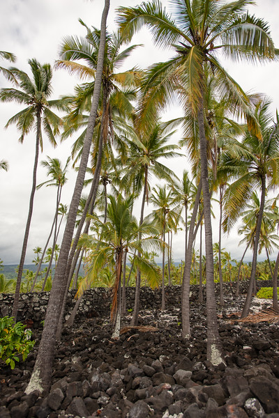 Hawaii2019-354.jpg