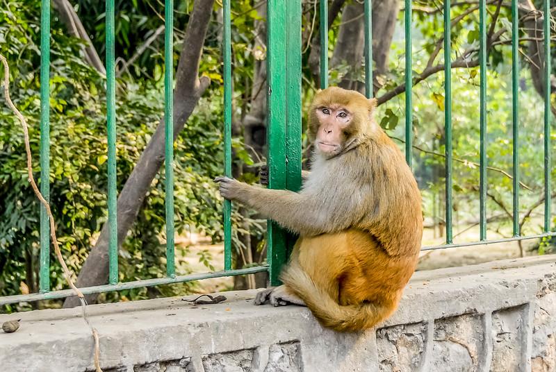 Delhi_1206_409.jpg