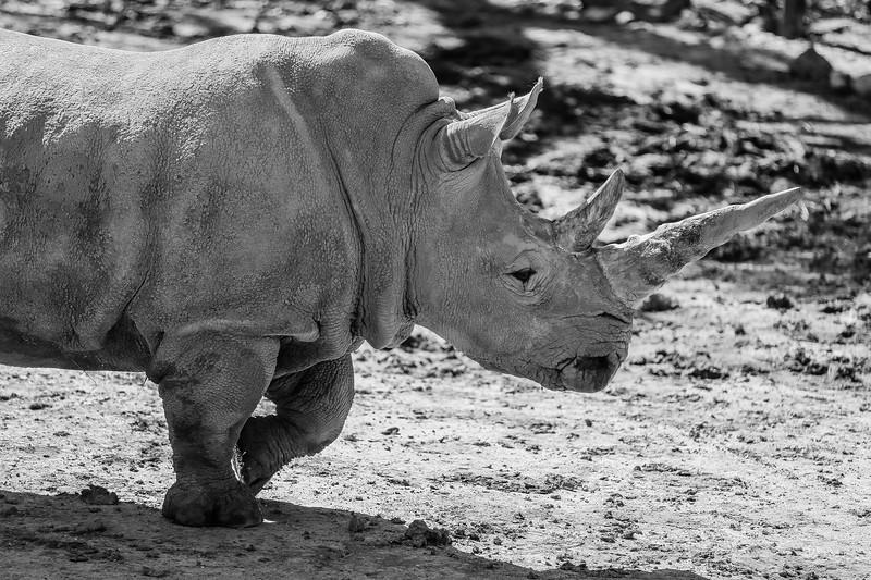 SafariWest2017-65.jpg