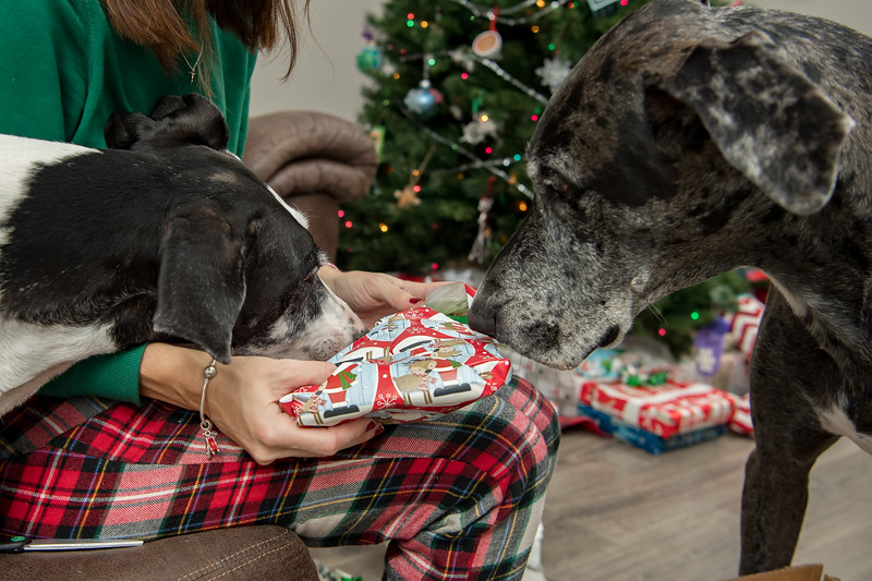 Doggy Christmas0016.jpg