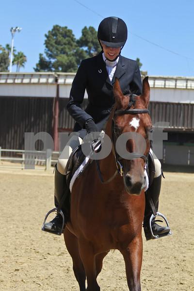 Arabian SH Under Saddle - AOTR