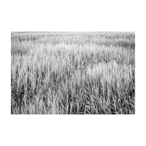 176_Field_10x10.jpg
