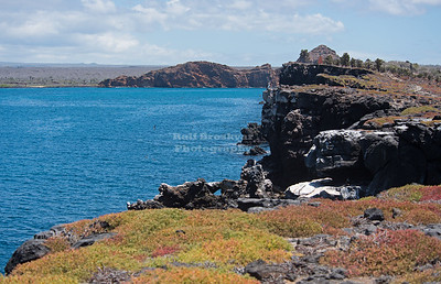 Ecuador - Galapagos - South Plaza Island