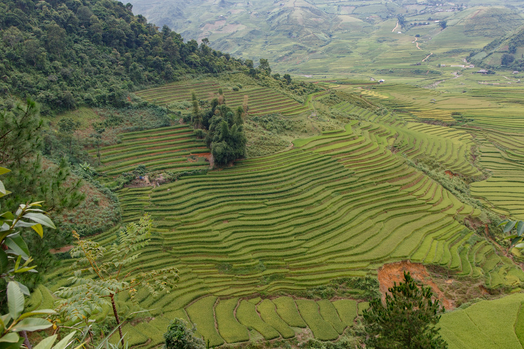 Northern Vietnam rice terrace