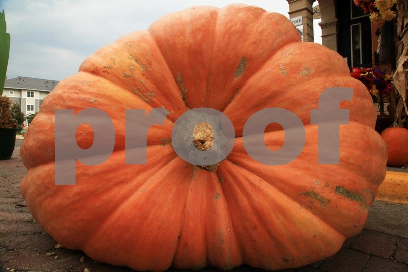 Pumpkin Patch 5641.jpg
