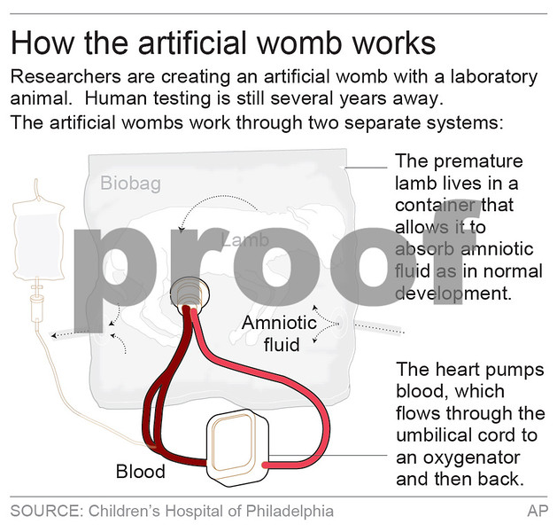 Scientists develop synthetic uterus to aid development of premature lambs