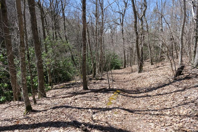 Little Green Creek Trail - 4,150'