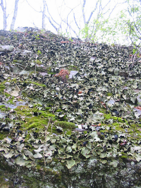 Flaky fungus