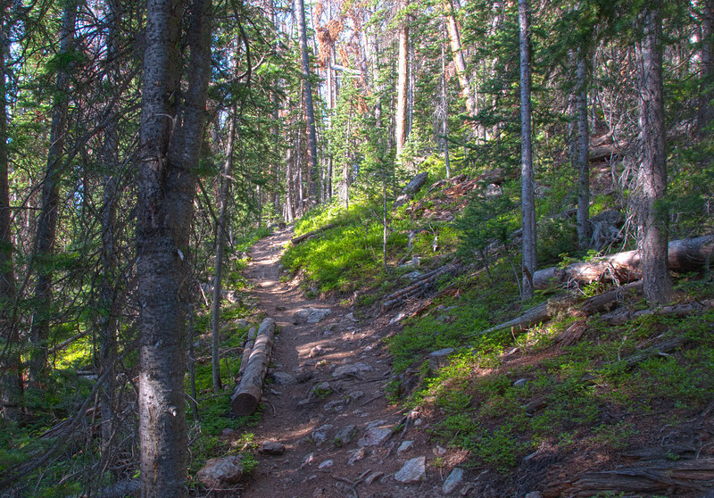Another trail photo.  Does not look too steep, but looks are deceiving!  Click on Map This to view a satellite map pinpointing where each of where these photos was taken.  GPS attachment on my camera captured the locations.