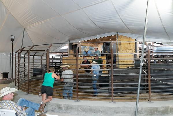 Sale Barn Opens July 17, 2020