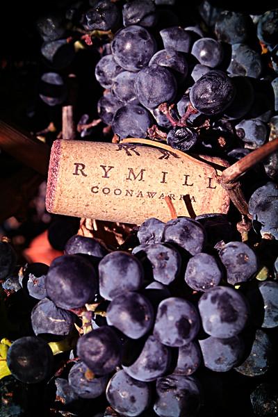 cork vine1.jpg