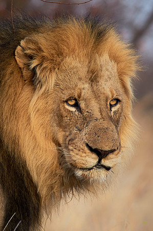 South African Animal Photos