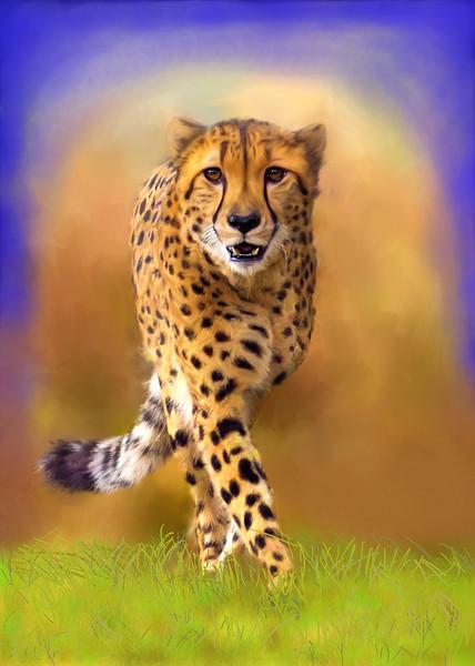 Cat-Walk.jpg