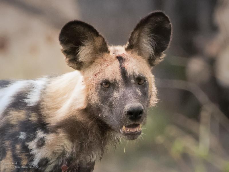 Botswana_dog_portrait_social.jpg