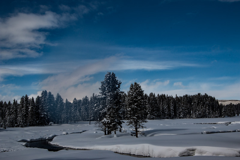 5142-Yellowstone Meadow-©Yvonne Carter.jpg