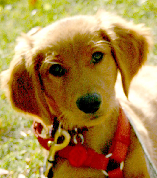 Pup Gunnar