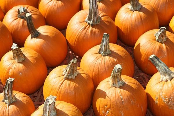 Burt's Pumpkin Farm - 10-1-06