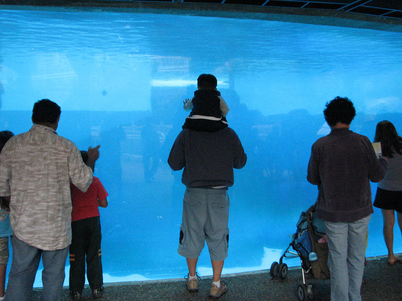 Deep Blue Sea. Shamu tank from down under.