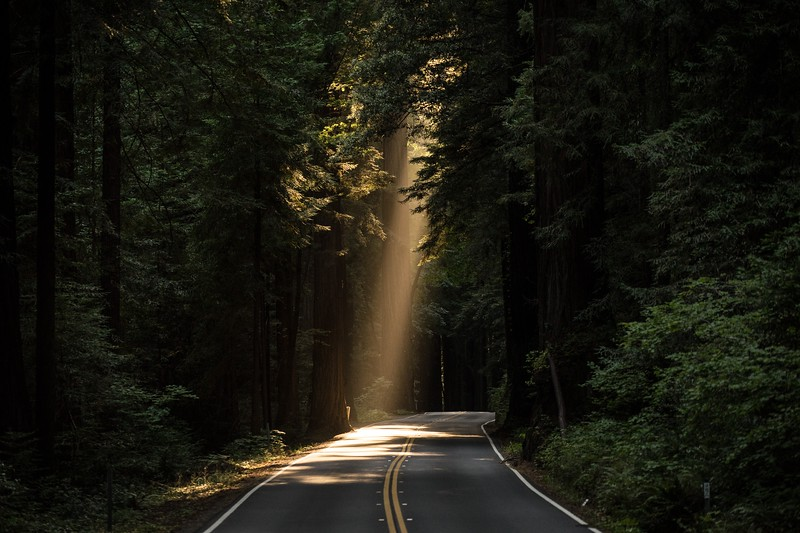 fun things to do in northern california - redwoods