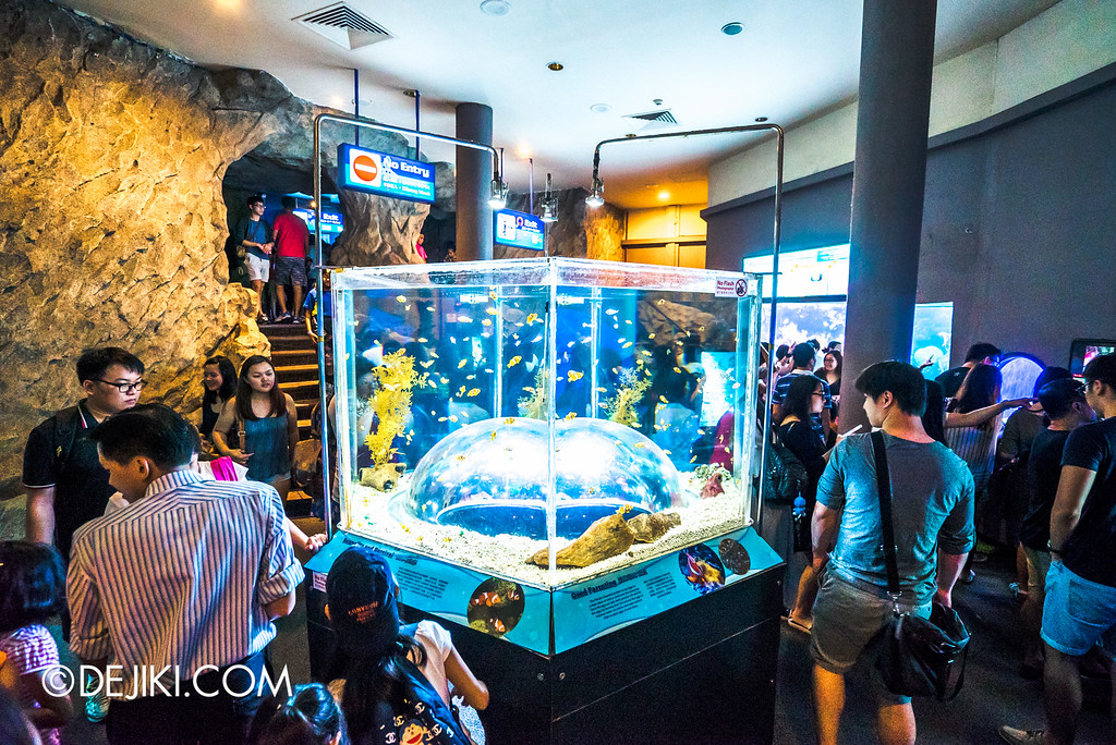 Underwater World Singapore - Clownfish Dome Tank