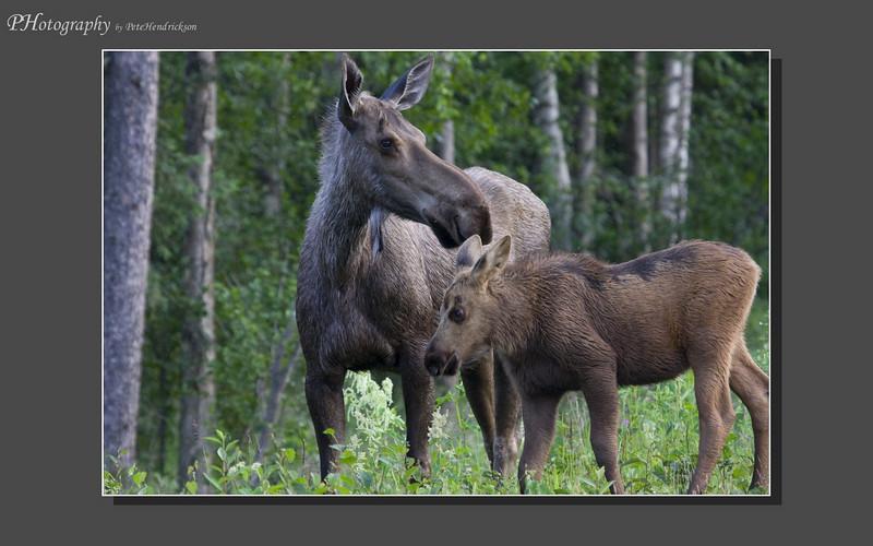 My Alaska 12-08-081.jpg