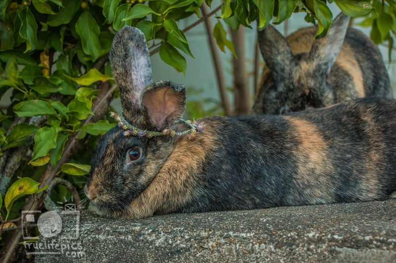 September 12, 2017 Bunnies in the Back Garden (10).jpg