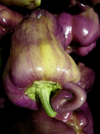 Slow Food Nation