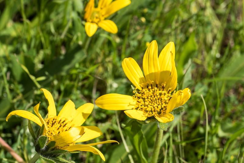 Edgewood_Park_wildflowers-07.jpg