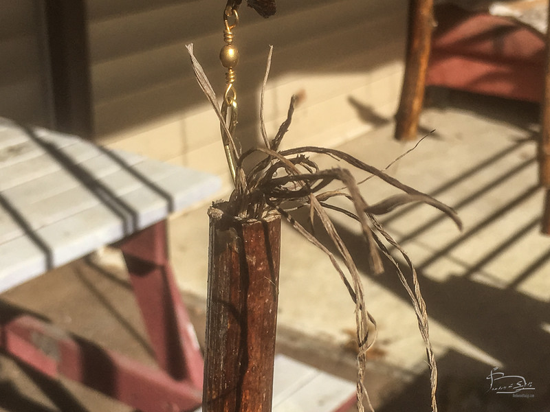 Two of the ragweed stalks sprouted growths top and bottom.  not sure if this is vegetative or animal process.