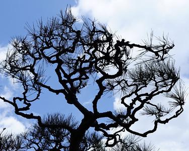 Trees Misc.