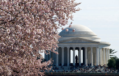 Washington DC Cherry Blossoms (2011)