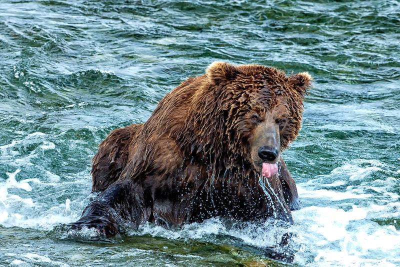 Alaska_2014_FH0T7601.jpg