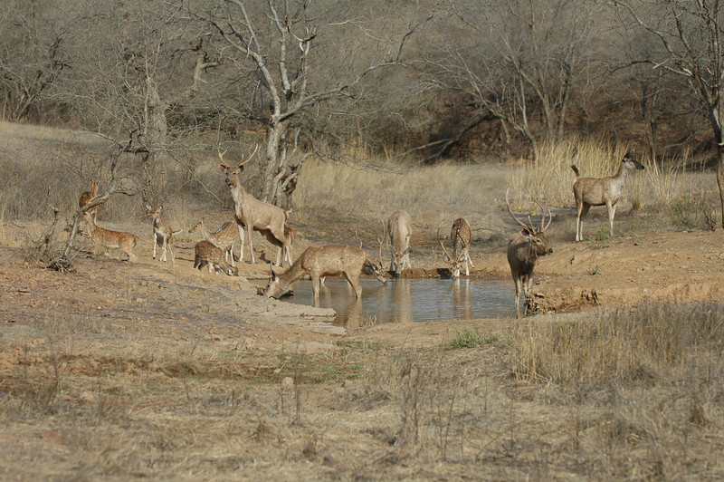 Ranthambore National Park: Watering hole