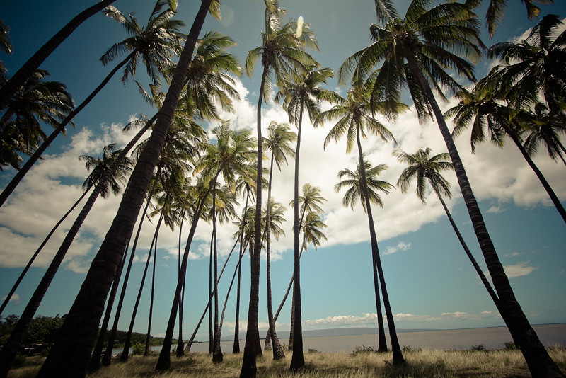 molokai palm trees.jpg