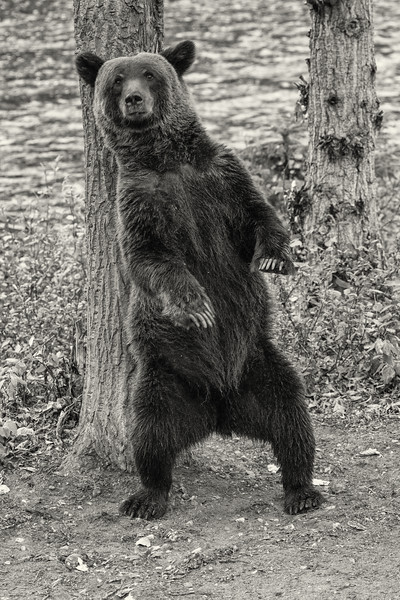 BC-Grizzly-Bears--4.jpg