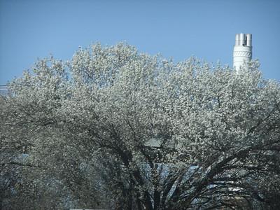 March - Flowering Trees in Virginia