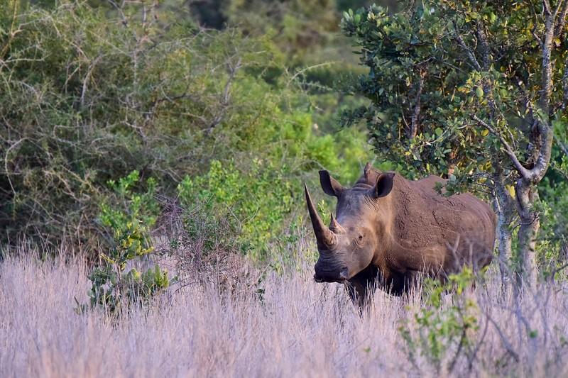 White Rhino landscape copy.jpg