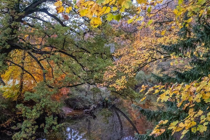 Knaresborough 3 Nov 18-7.jpg