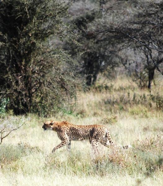 Serengeti (144).JPG