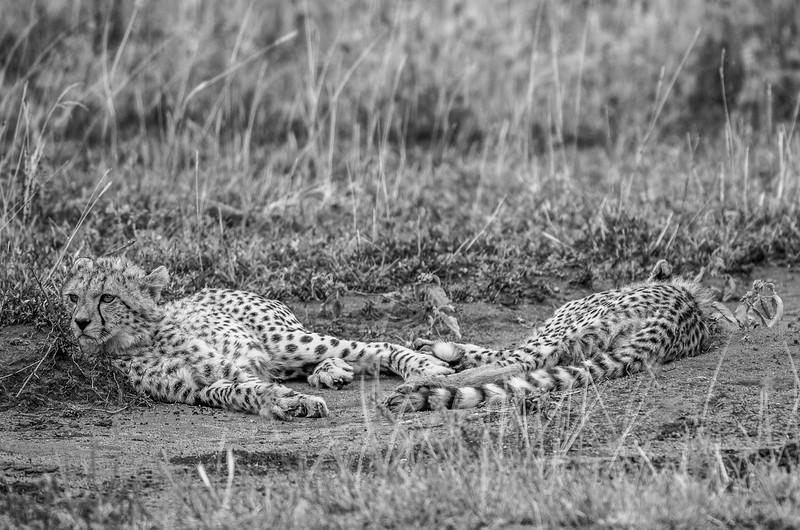 Tanzania_Feb_2018-1152.jpg