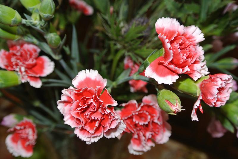2013-09-18 Bloemen gekregen 02.JPG