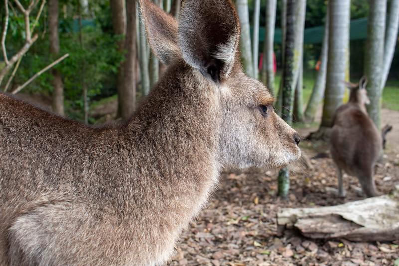 Australia_194.jpg